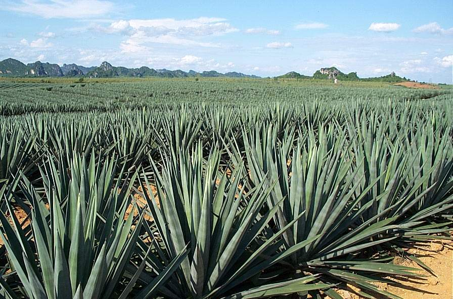 Hahnemühle Agave Natural Line made from Agave Plants (A. sisalana)